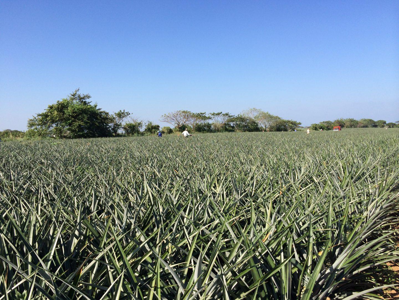 Frutas y Conservas de Veracruz